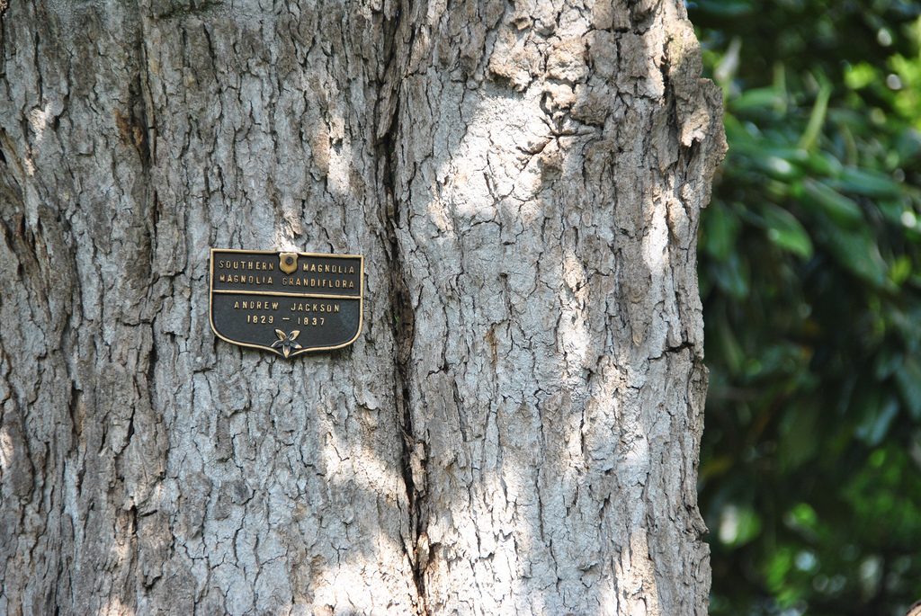 Media Suggests Melania Trump Wants to Cut Down 200yo White House Tree For No Specific Reason